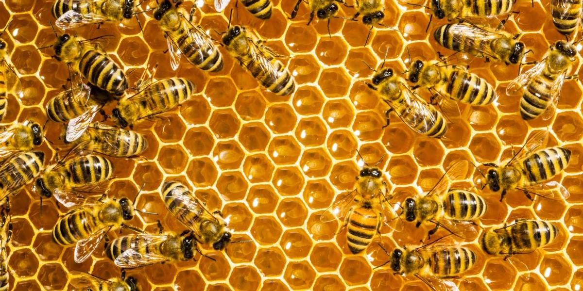蜜蜂采了花蜜是怎么变成蜂蜜的