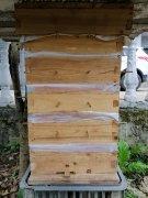 中蜂如何近距离摆放(中蜂蜂箱摆放位置有什么讲究吗)