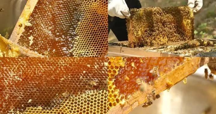 蜂蜜和蜂蜡混在一起怎么处理