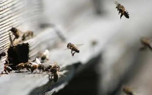 家里有很多蜜蜂怎么办(家里突然来了好多蜜蜂怎么办)