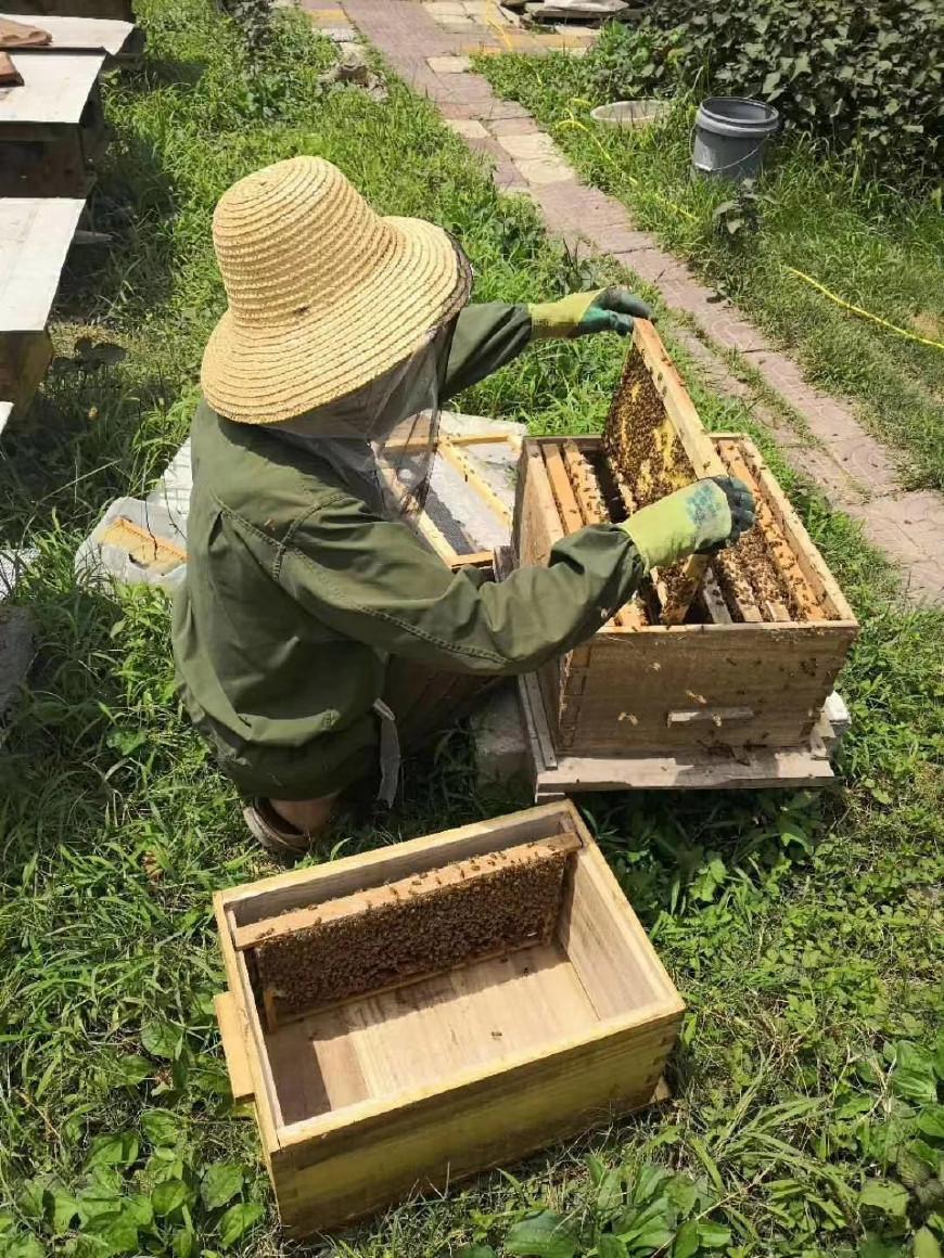 养蜂多久开箱看一次(蜂箱多久开箱检查一次)