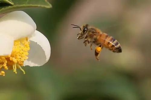 蜜蜂晚上要关着吗(蜜蜂关一天可以吗)