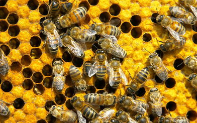 冬天蜜蜂怎么喂糖(冬天怎么用白糖来喂蜜蜂)