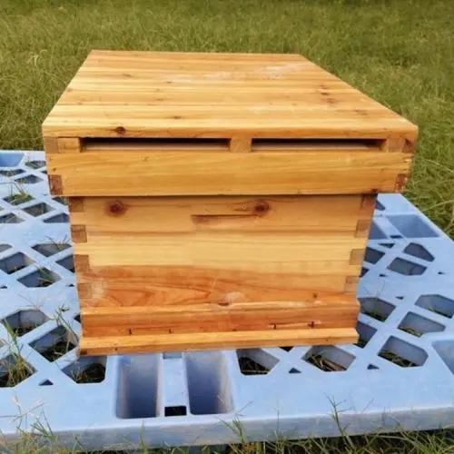 中蜂蜂箱距离