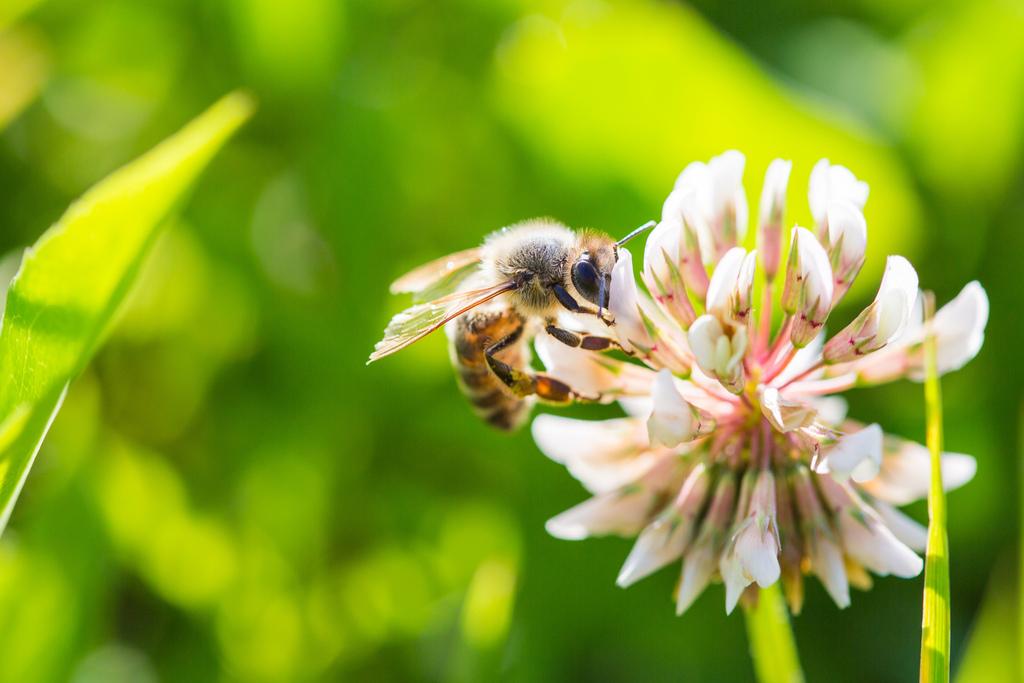 如何快速繁殖蜜蜂(一箱蜜蜂繁殖速度)