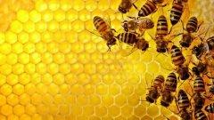 蜜蜂分蜂热怎么分箱(蜜蜂分蜂热有什么表现)