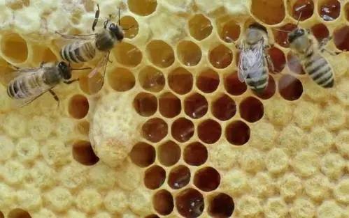 一只蜜蜂有几条腿