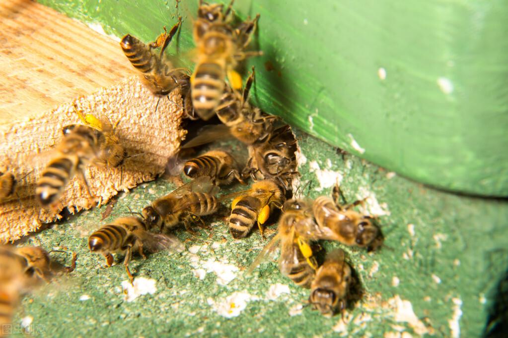 蜜蜂的社会结构是什么(蜜蜂的社会生活)