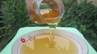 冬天怎么取蜂蜜(蜜蜂冬天可以取蜜吗)