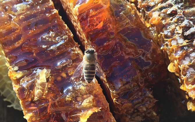 网上卖的蜂巢蜜是真的吗(网上蜂蜜巢选购技巧)