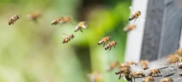 养蜂人饲喂蜂群的小技巧
