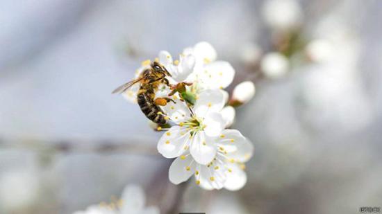 花粉季节是什么时候(花粉季节是几月到几月)