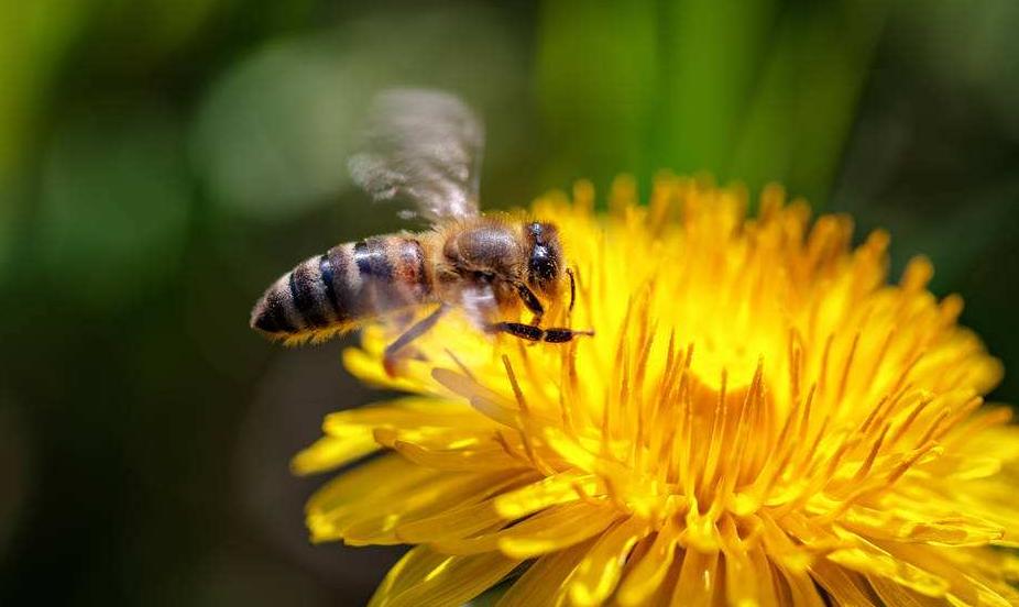 中蜂强群多少脾合适(中蜂强群的标准是怎样的)