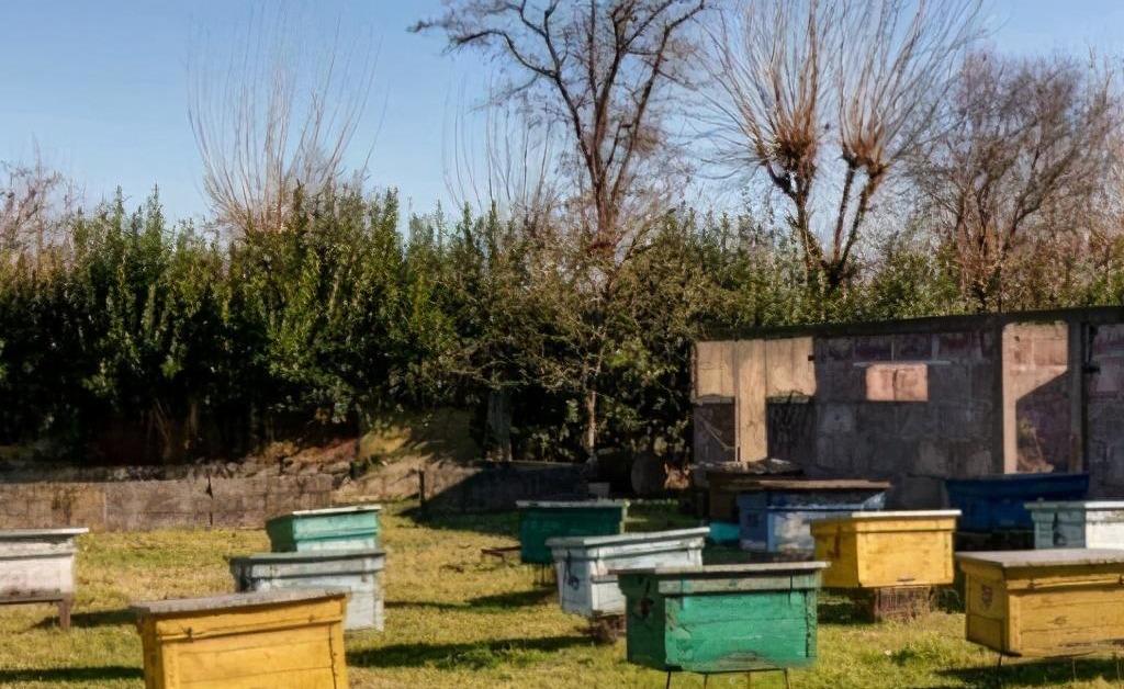 一个人最多能养多少箱蜜蜂