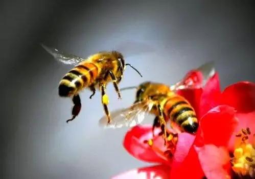 很多侦查蜂咬巢门是什么意思(侦查蜂一般在什么地方出现)