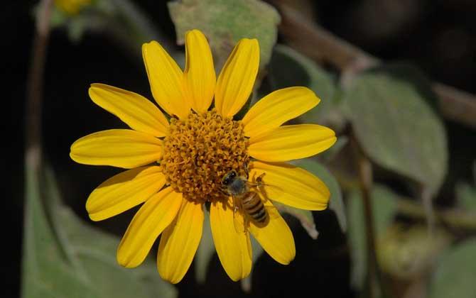 蜜蜂和蚂蚁的相同之处是什么(蜜蜂和蚂蚁的区别是什么)