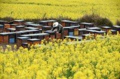 养蜂只养一箱可以吗(自己养一箱蜜蜂怎么养)