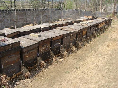 蜜蜂箱附近有蚂蚁怎么防治(蜂箱内有蚂蚁怎么防治)