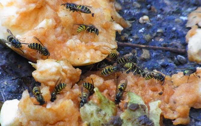 野生马蜂怎么过冬(马蜂是怎样度过冬天的?)