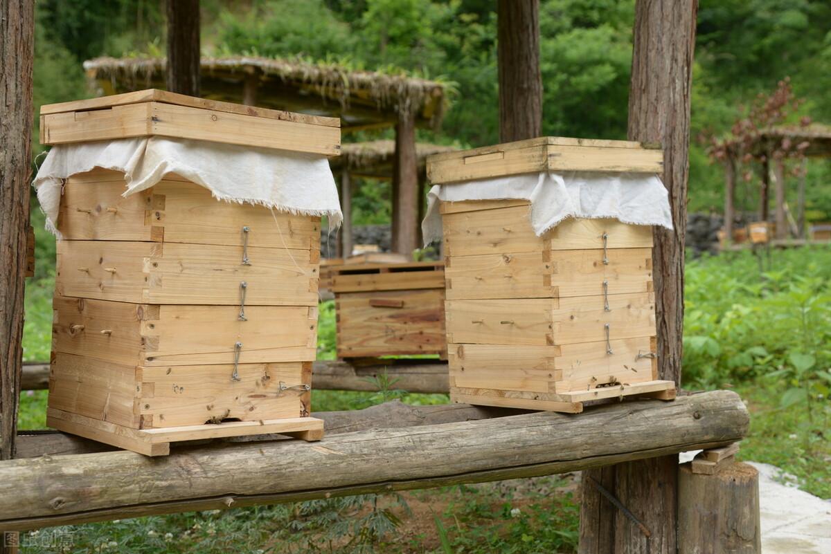 一脾蜂能繁殖起来吗(一脾蜜蜂快速繁殖方法)