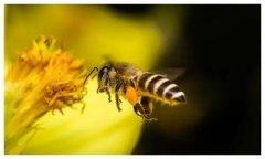 蜂群出现大量雄蜂怎么回事(蜂群出现很多雄蜂什么问题)