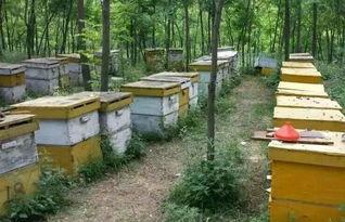 养蜂工具和蜂箱哪里有卖的(怎么买养蜂工具和蜂箱)
