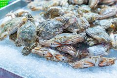 螃蟹死了到底能不能吃