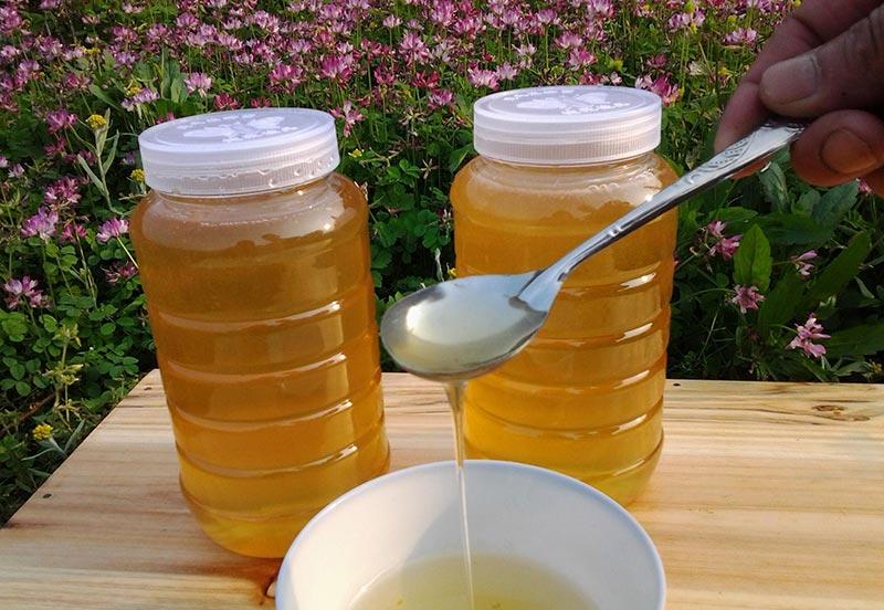 意大利蜜蜂养殖前景如何(养意大利蜜蜂能赚钱么?)