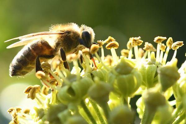 中华蜜蜂养殖技术在哪里学(怎么养殖中蜂)