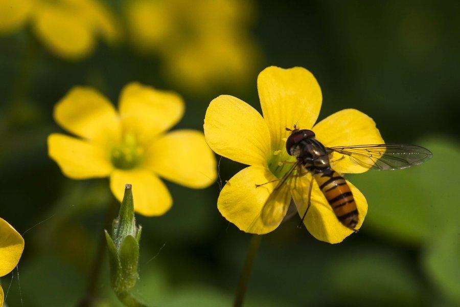 中华蜜蜂冬季的养殖方法(中蜂越冬应该采取的措施)