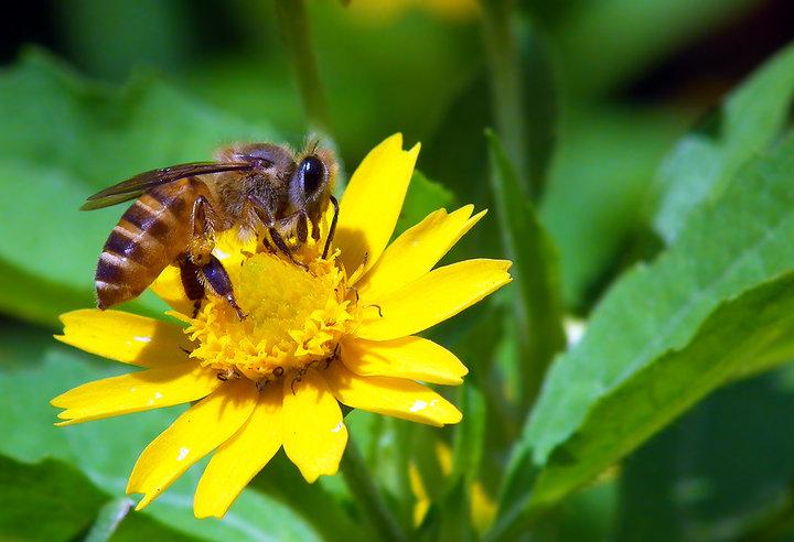 中华蜜蜂蜂箱多少钱一个(中华蜜蜂蜂箱自己做成本多少)