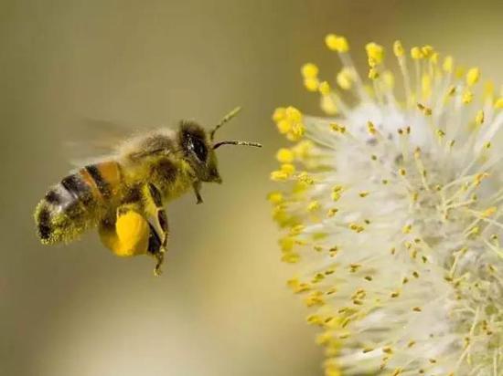 中华蜜蜂巢内不见卵什么原因(为什么会出现蜂群里有蜜无子)