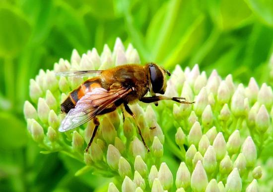 中华蜜蜂隔王片能隔一年吗(中蜂隔王片什么时候用?)