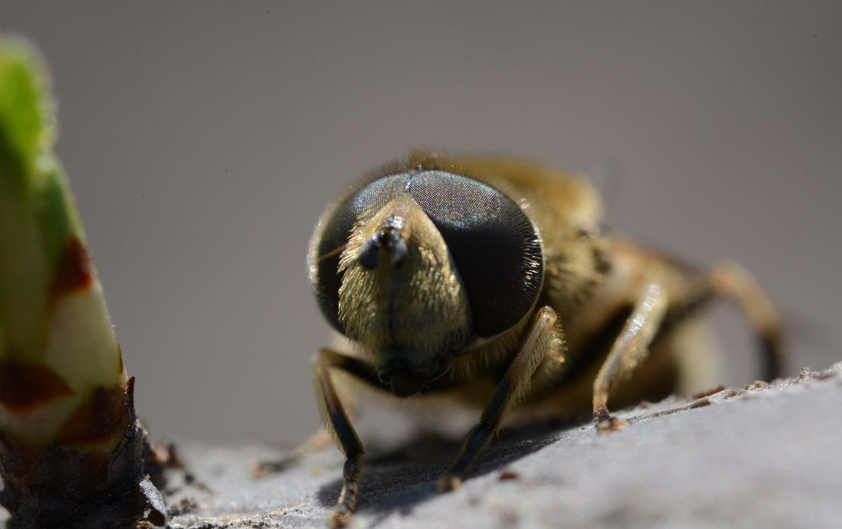 中华蜜蜂是中国的吗(中蜂该如何养殖)