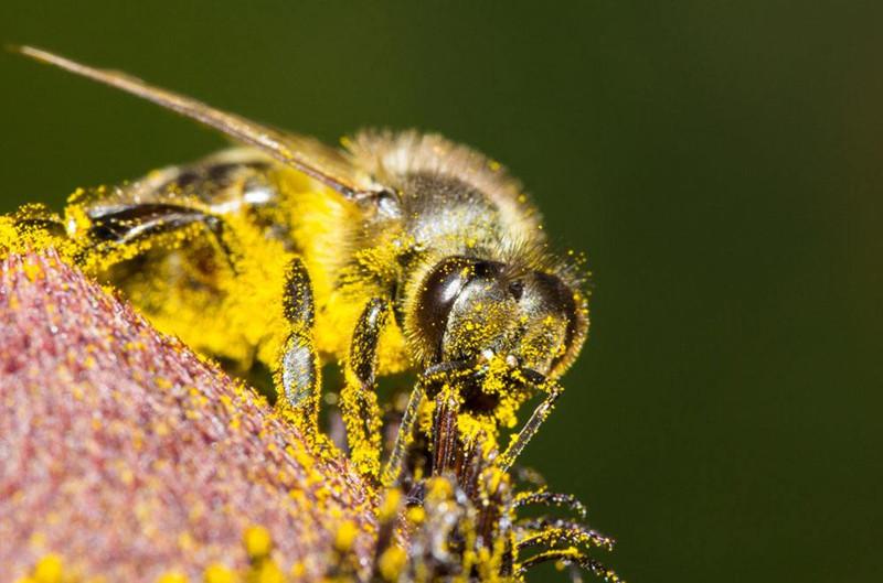 中华蜜蜂过冬怎么保温(蜜蜂越冬,使用什么作为保温材料好?)