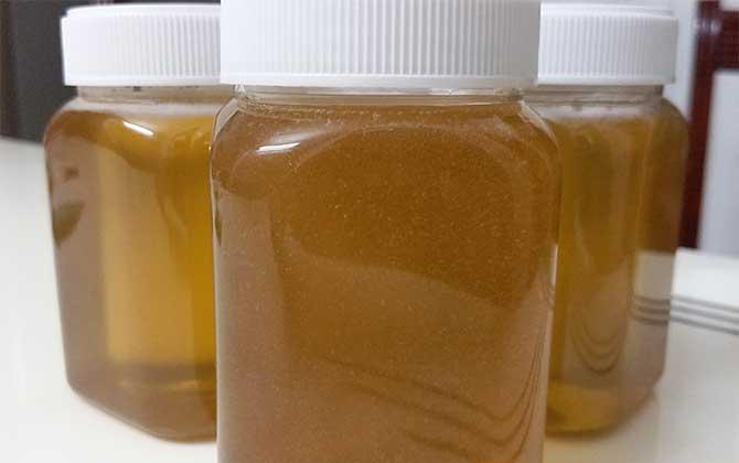 山乌桕是全国产蜜最多吗(乌桕蜜的产量有多高?)