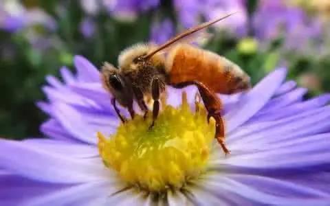 乌桕蜜结晶能吃吗(蜂蜜分等级吗?)