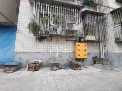 城市阳台养蜂技术(家庭养蜂需要什么条件)